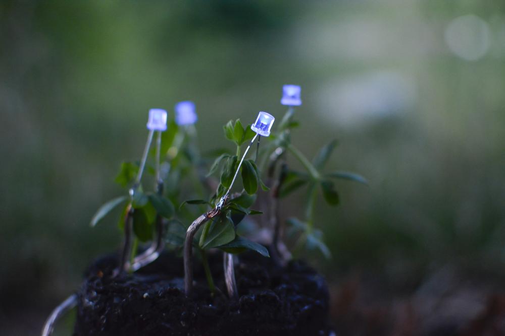 plant-lamp_julius-fuehrer_04.jpg