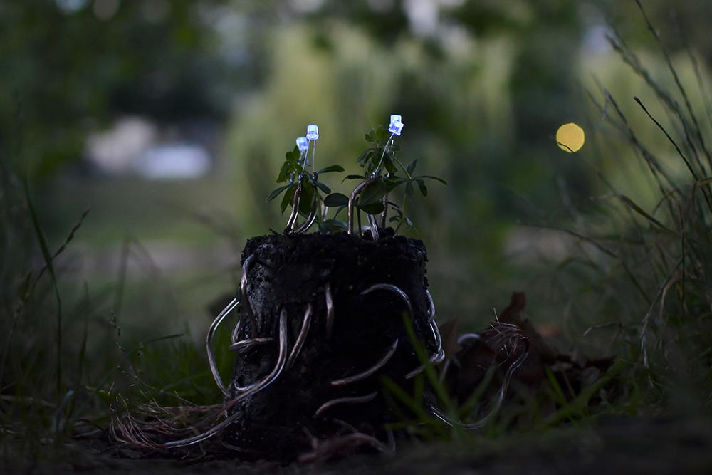 plant-lamp_julius-fuehrer_02.jpg